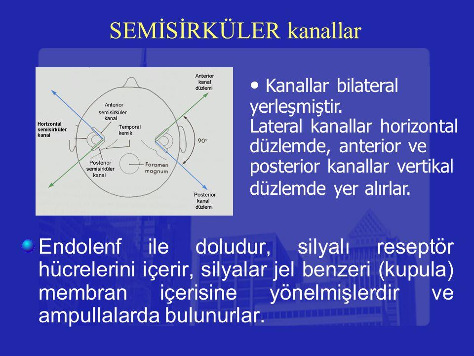SEMİSİRKÜLER kanallar