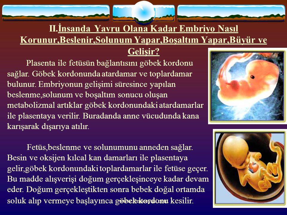II.İnsanda Yavru Olana Kadar Embriyo Nasıl Korunur,Beslenir,Solunum Yapar,Boşaltım Yapar,Büyür ve Gelişir