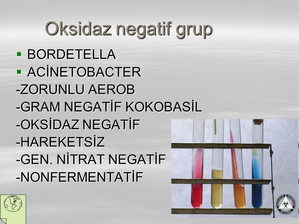 Oksidaz negatif grup BORDETELLA ACİNETOBACTER -ZORUNLU AEROB