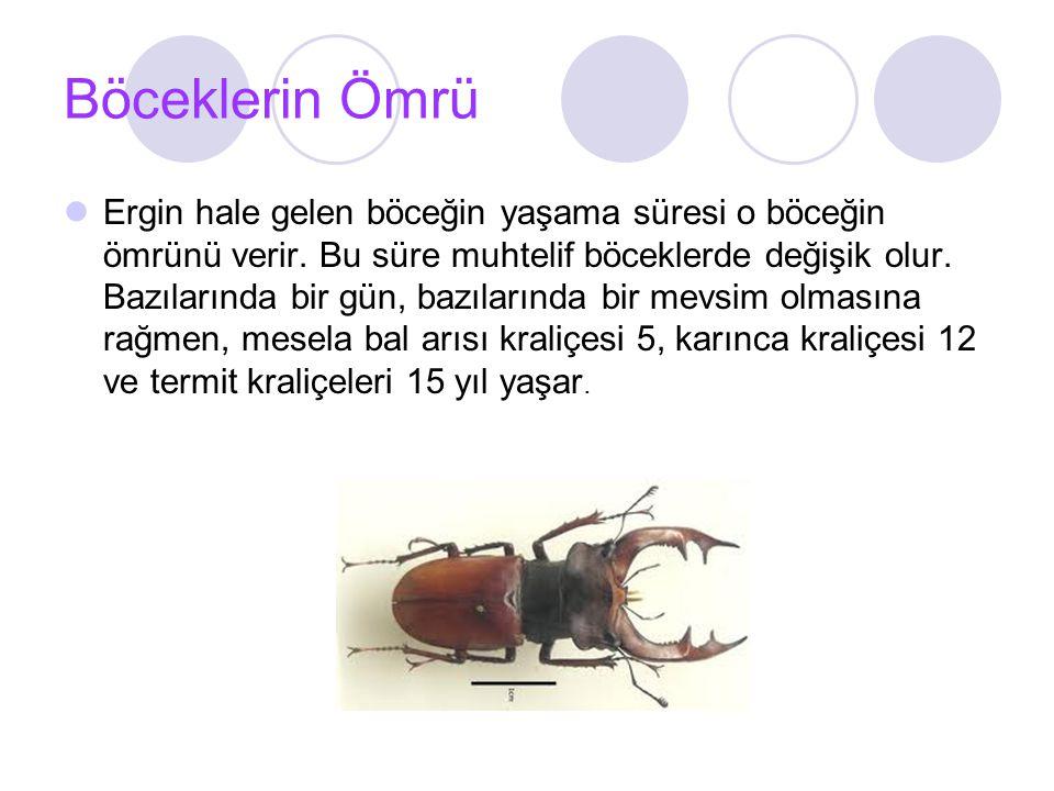 Böceklerin Ömrü
