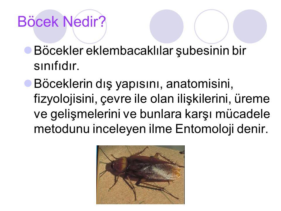 Böcek Nedir Böcekler eklembacaklılar şubesinin bir sınıfıdır.