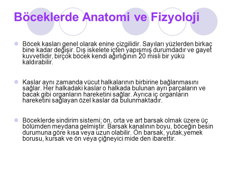 Böceklerde Anatomi ve Fizyoloji