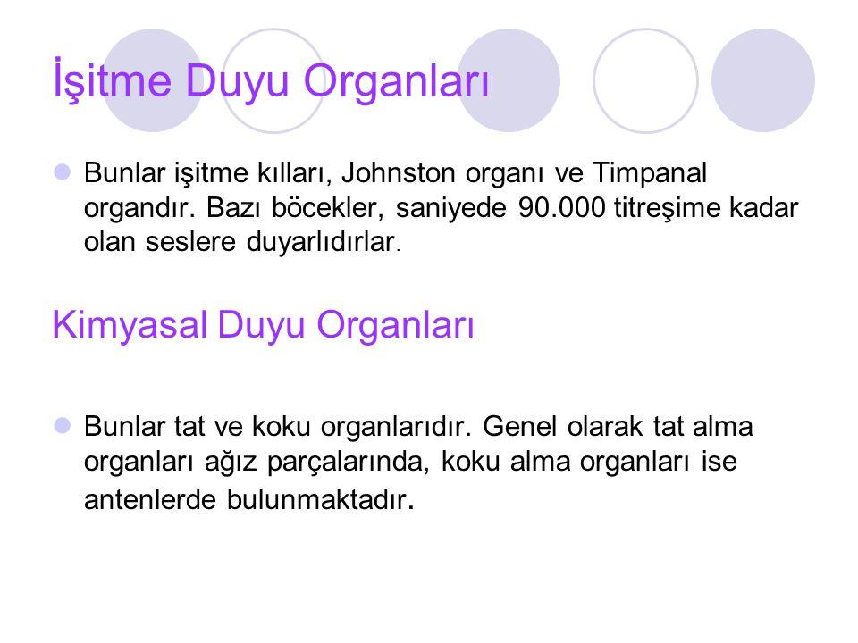 İşitme Duyu Organları Kimyasal Duyu Organları
