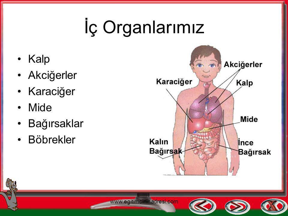 İç Organlarımız Kalp Akciğerler Karaciğer Mide Bağırsaklar Böbrekler