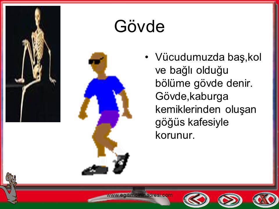 Gövde Vücudumuzda baş,kol ve bağlı olduğu bölüme gövde denir. Gövde,kaburga kemiklerinden oluşan göğüs kafesiyle korunur.