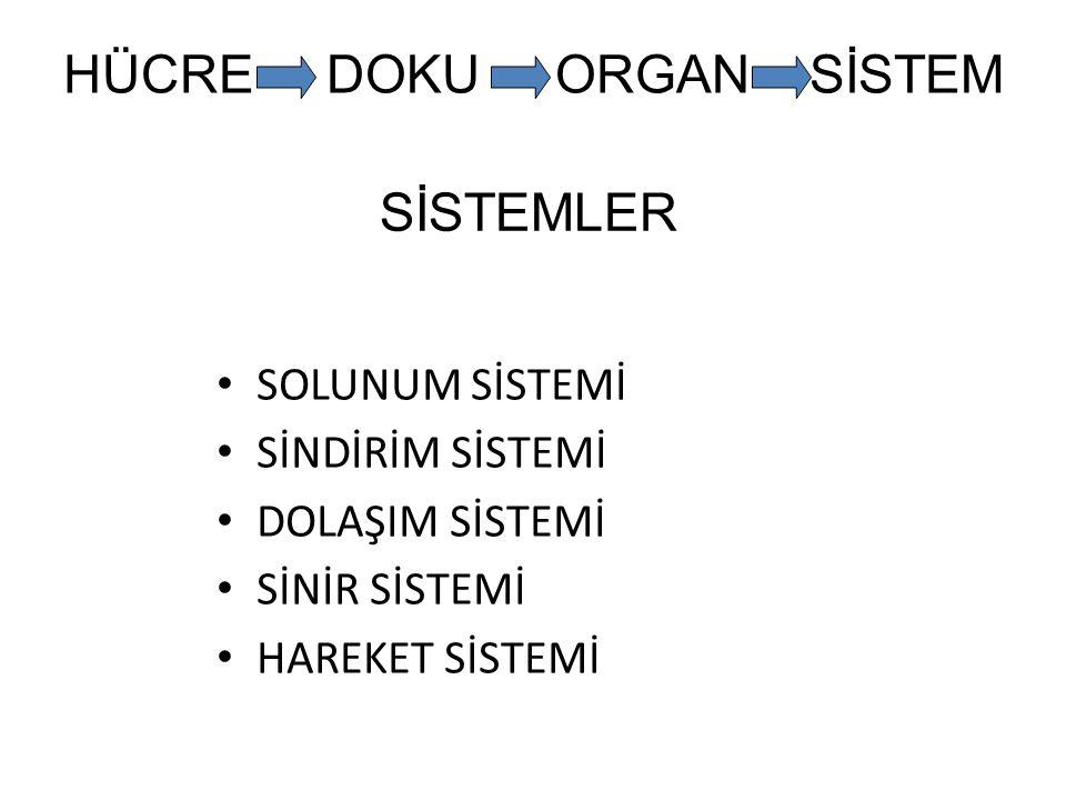 HÜCRE DOKU ORGAN SİSTEM