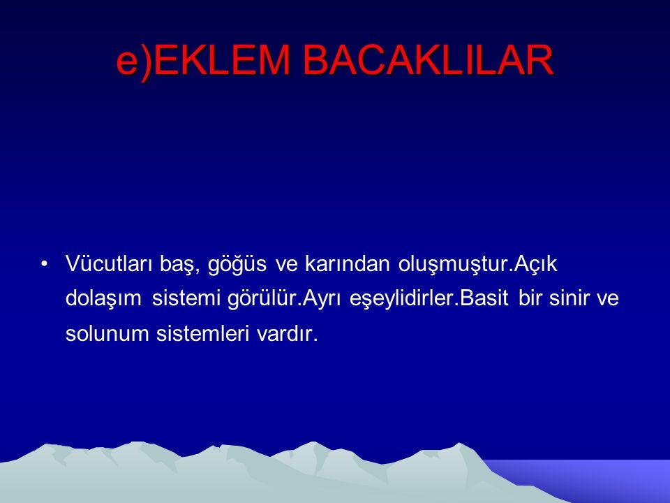 e)EKLEM BACAKLILAR