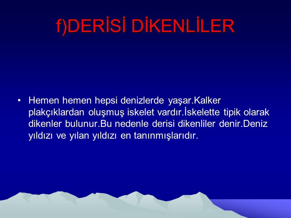 f)DERİSİ DİKENLİLER