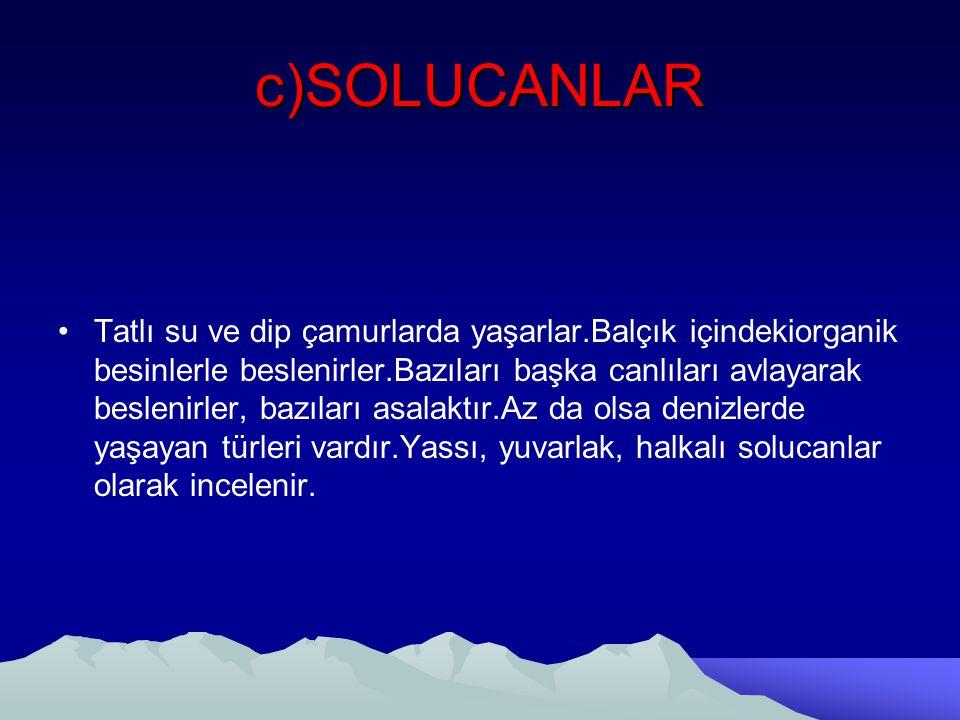 c)SOLUCANLAR