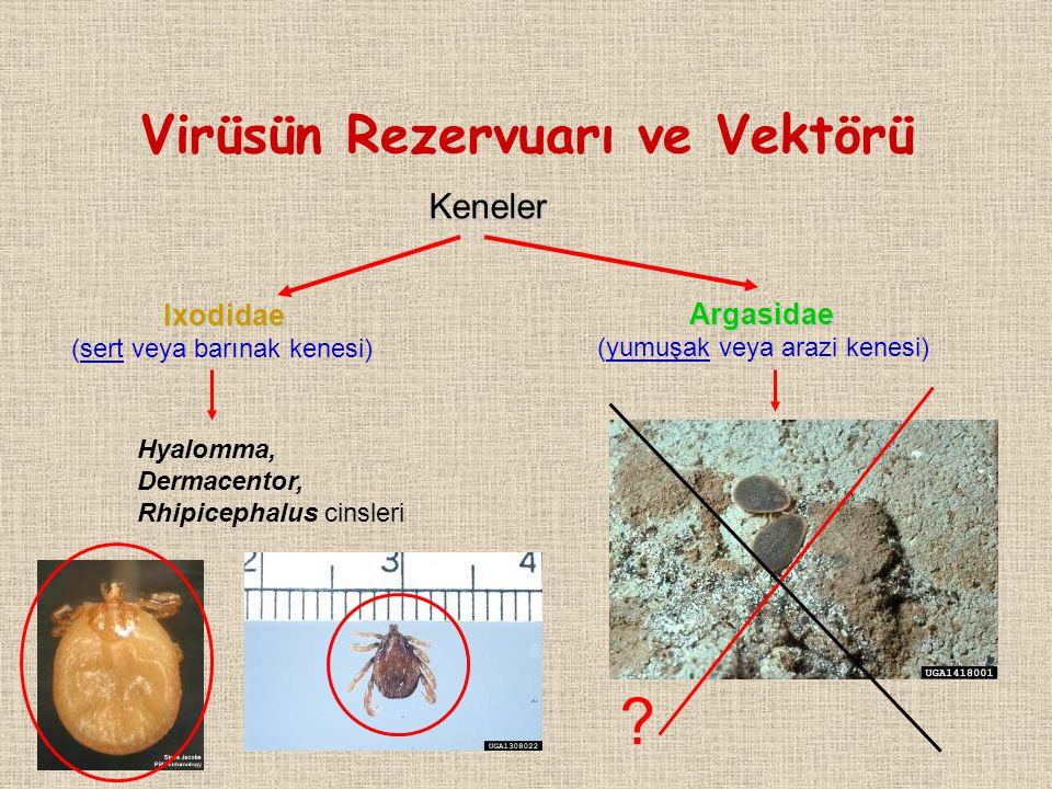 Virüsün Rezervuarı ve Vektörü