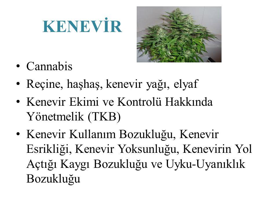 KENEVİR Cannabis Reçine, haşhaş, kenevir yağı, elyaf