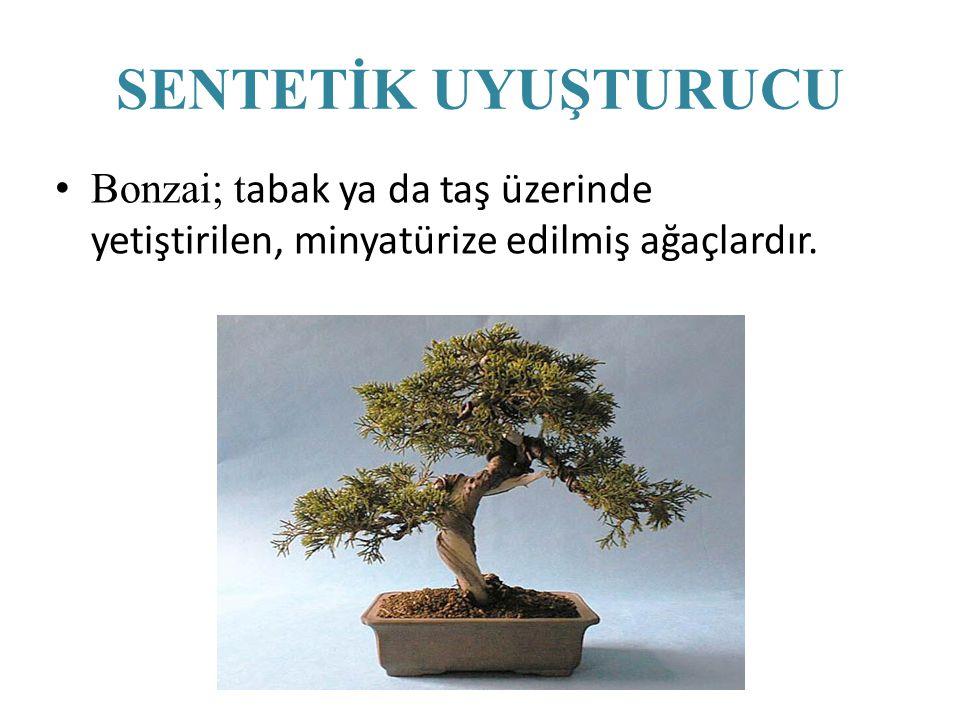 SENTETİK UYUŞTURUCU Bonzai; tabak ya da taş üzerinde yetiştirilen, minyatürize edilmiş ağaçlardır.