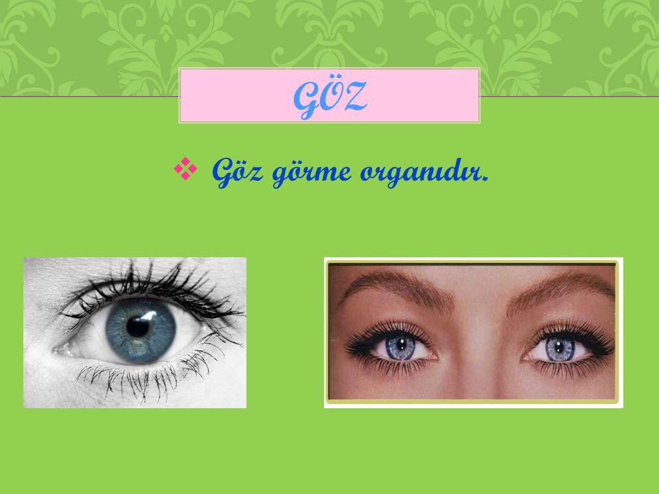 göz Göz görme organıdır.