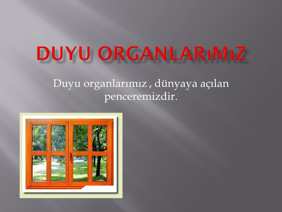 Duyu organlarımız , dünyaya açılan penceremizdir.