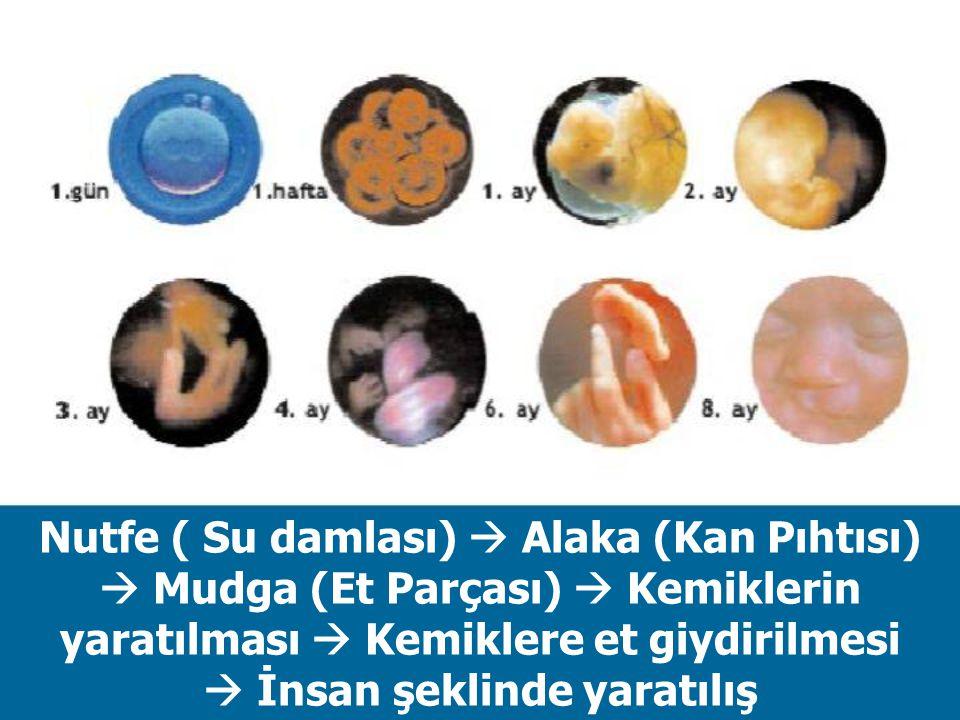 Nutfe ( Su damlası)  Alaka (Kan Pıhtısı)  Mudga (Et Parçası)  Kemiklerin yaratılması  Kemiklere et giydirilmesi  İnsan şeklinde yaratılış
