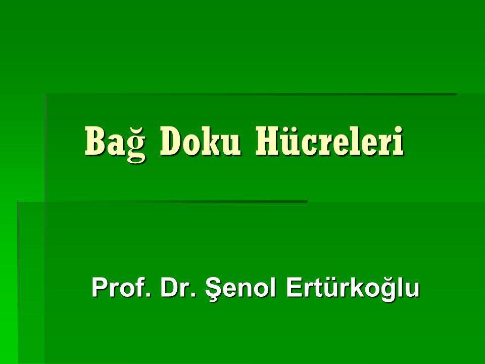 Prof. Dr. Şenol Ertürkoğlu