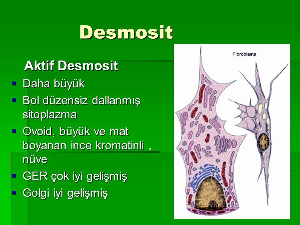 Desmosit Aktif Desmosit Daha büyük Bol düzensiz dallanmış sitoplazma
