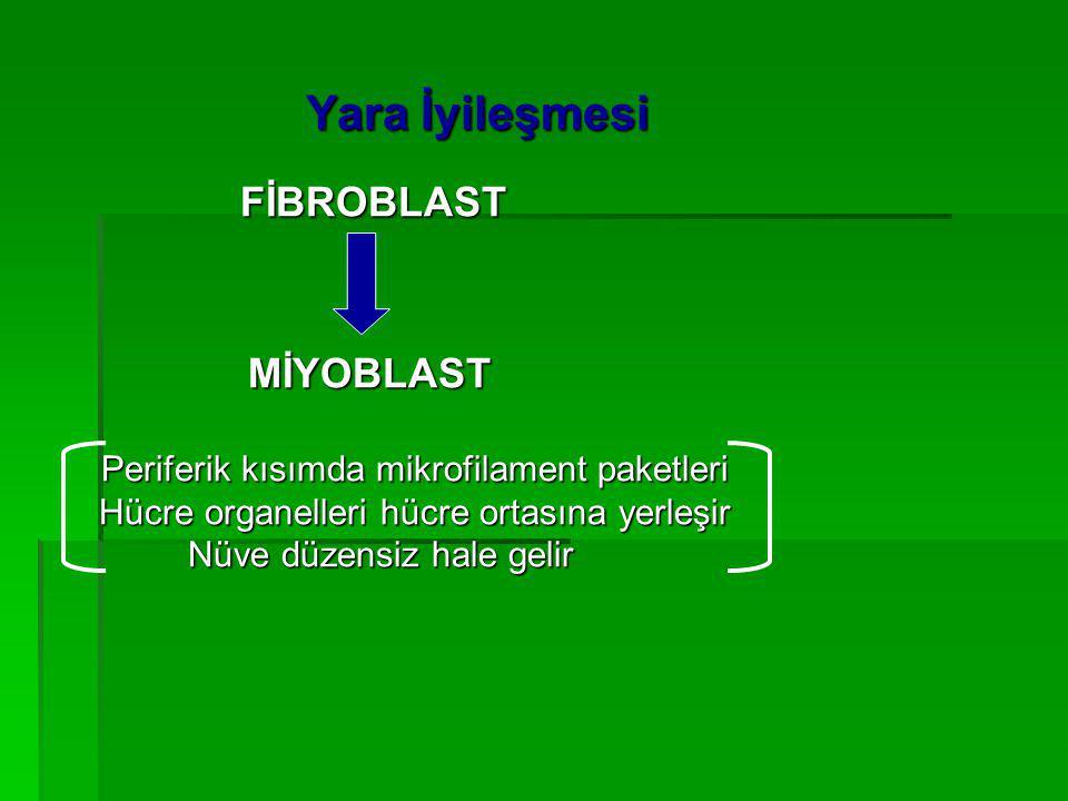 Hücre organelleri hücre ortasına yerleşir Nüve düzensiz hale gelir