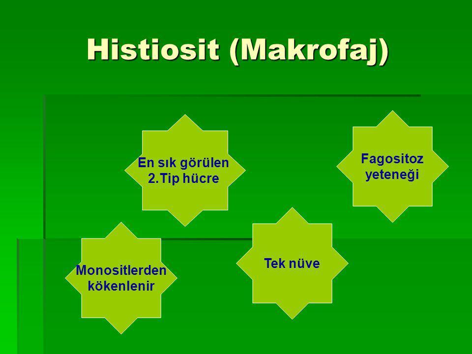 Histiosit (Makrofaj) Fagositoz En sık görülen yeteneği 2.Tip hücre