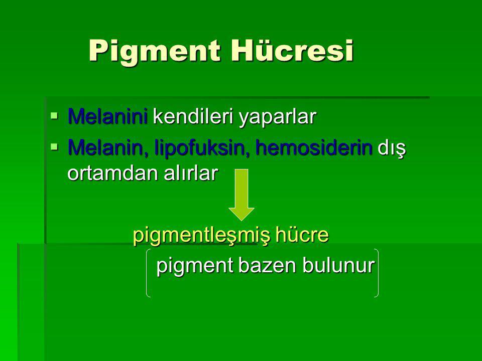 Pigment Hücresi Melanini kendileri yaparlar