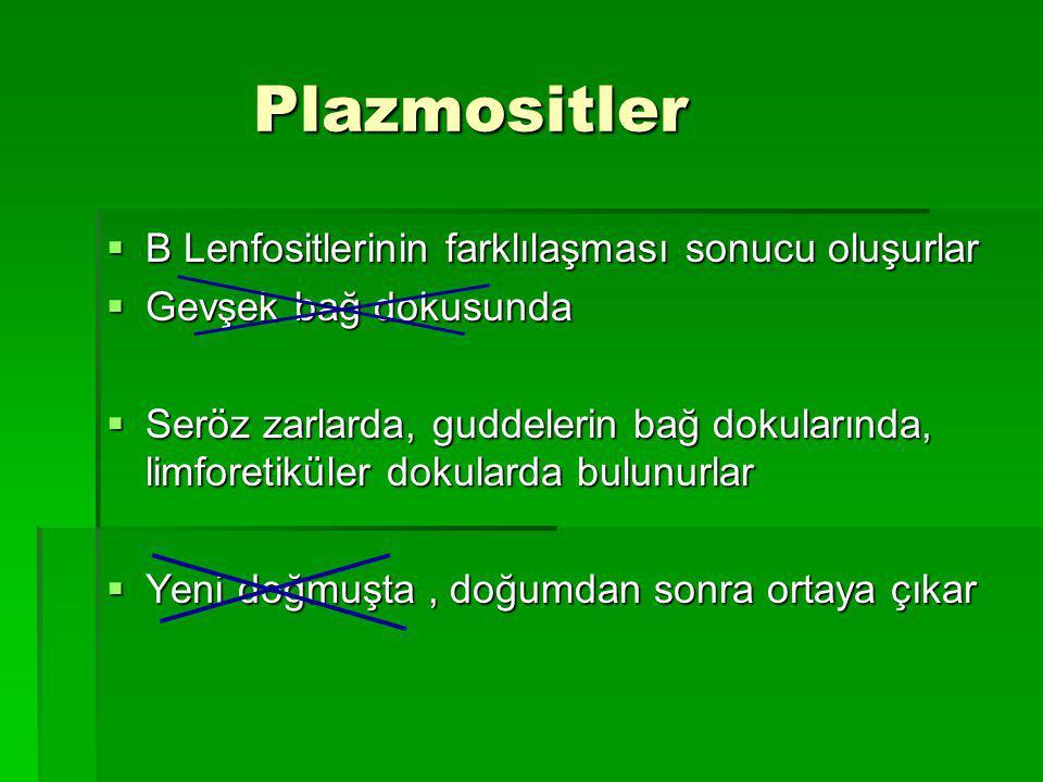 Plazmositler B Lenfositlerinin farklılaşması sonucu oluşurlar