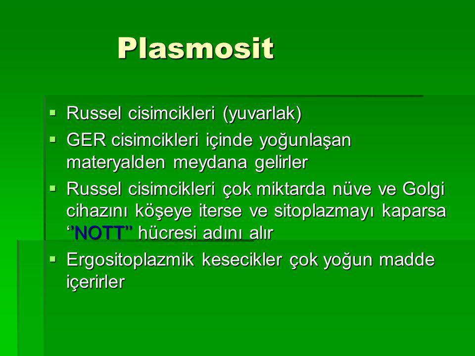 Plasmosit Russel cisimcikleri (yuvarlak)