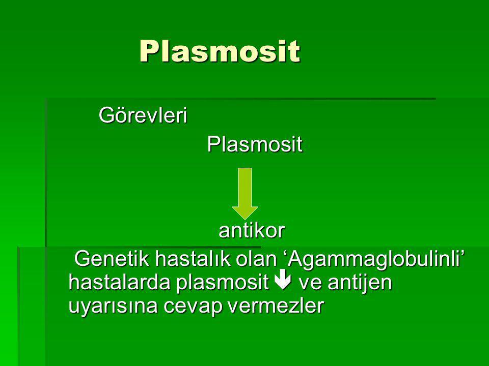 Plasmosit Görevleri Plasmosit antikor