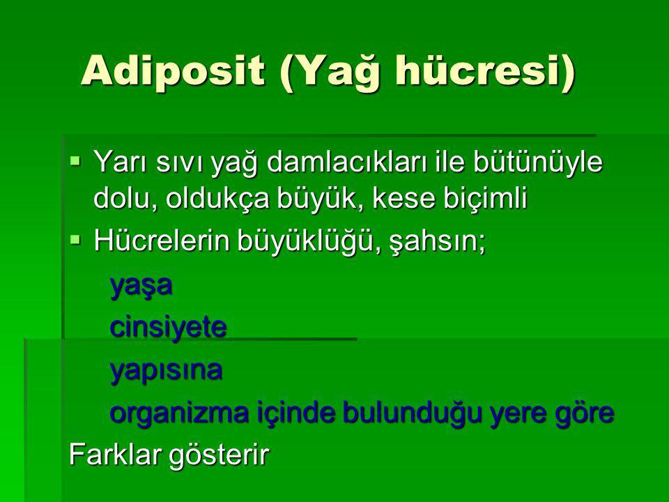Adiposit (Yağ hücresi)