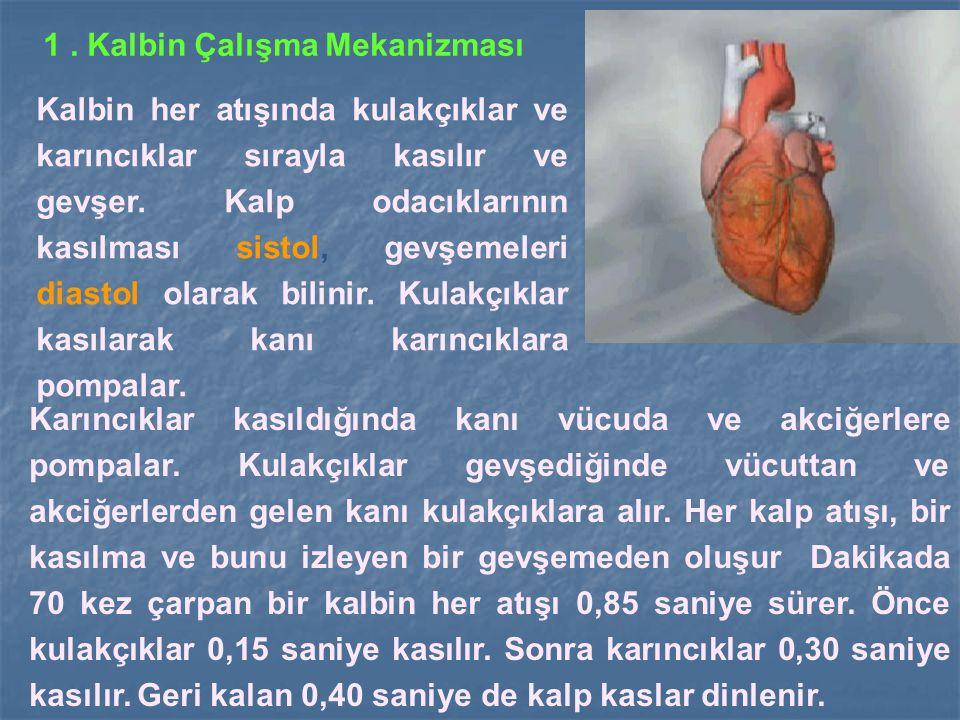 1 . Kalbin Çalışma Mekanizması