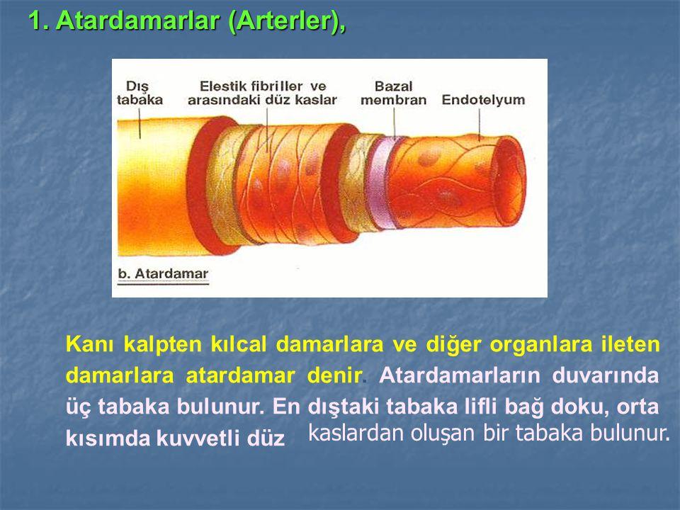 1. Atardamarlar (Arterler),