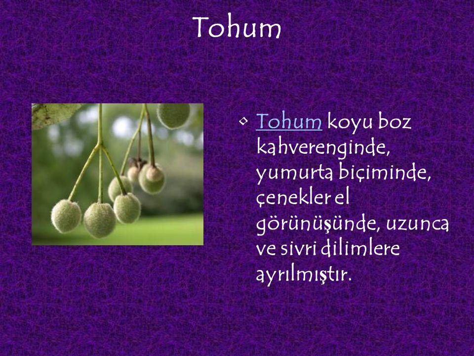 Tohum Tohum koyu boz kahverenginde, yumurta biçiminde, çenekler el görünüşünde, uzunca ve sivri dilimlere ayrılmıştır.