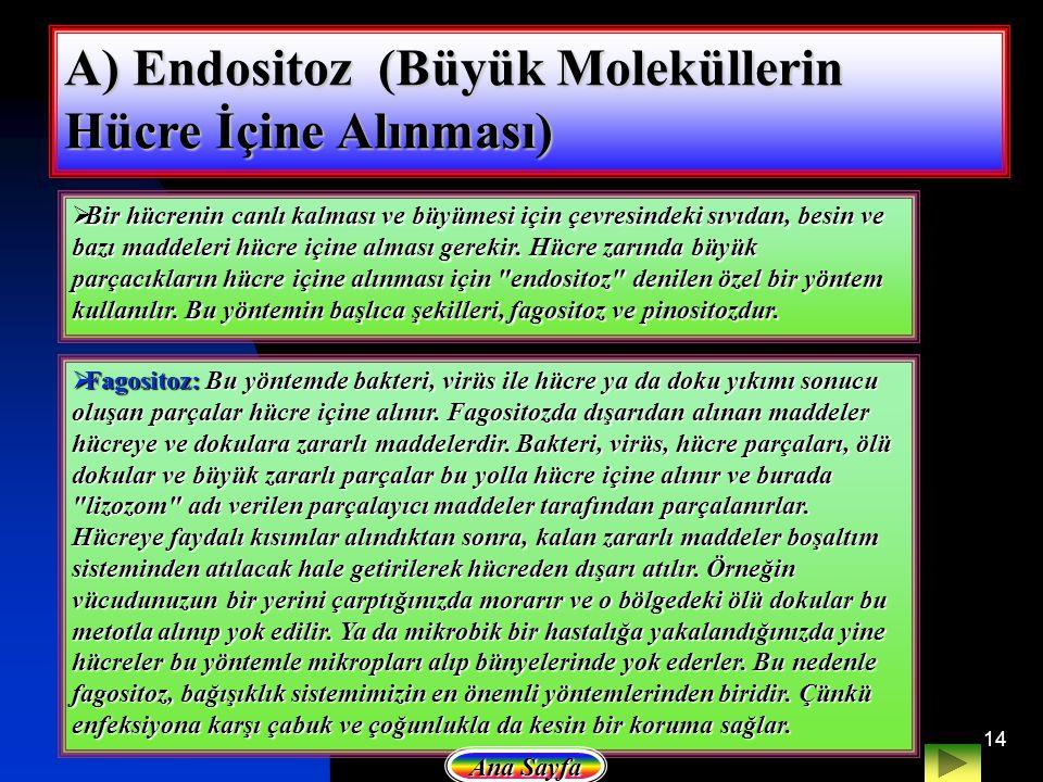 A) Endositoz (Büyük Moleküllerin Hücre İçine Alınması)
