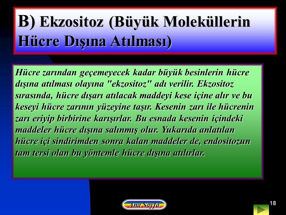 B) Ekzositoz (Büyük Moleküllerin Hücre Dışına Atılması)