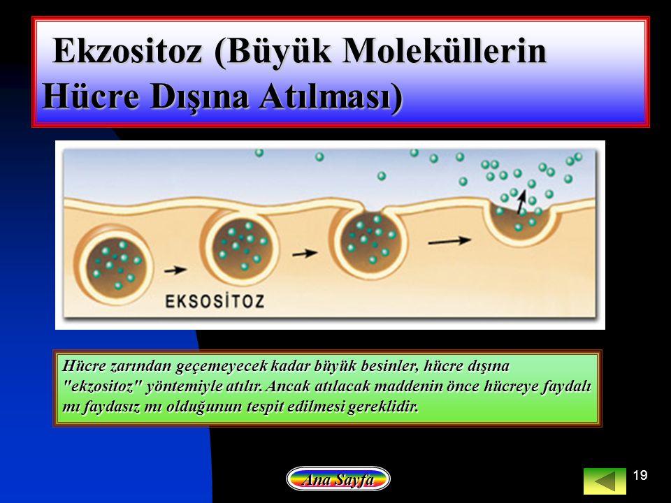 Ekzositoz (Büyük Moleküllerin Hücre Dışına Atılması)