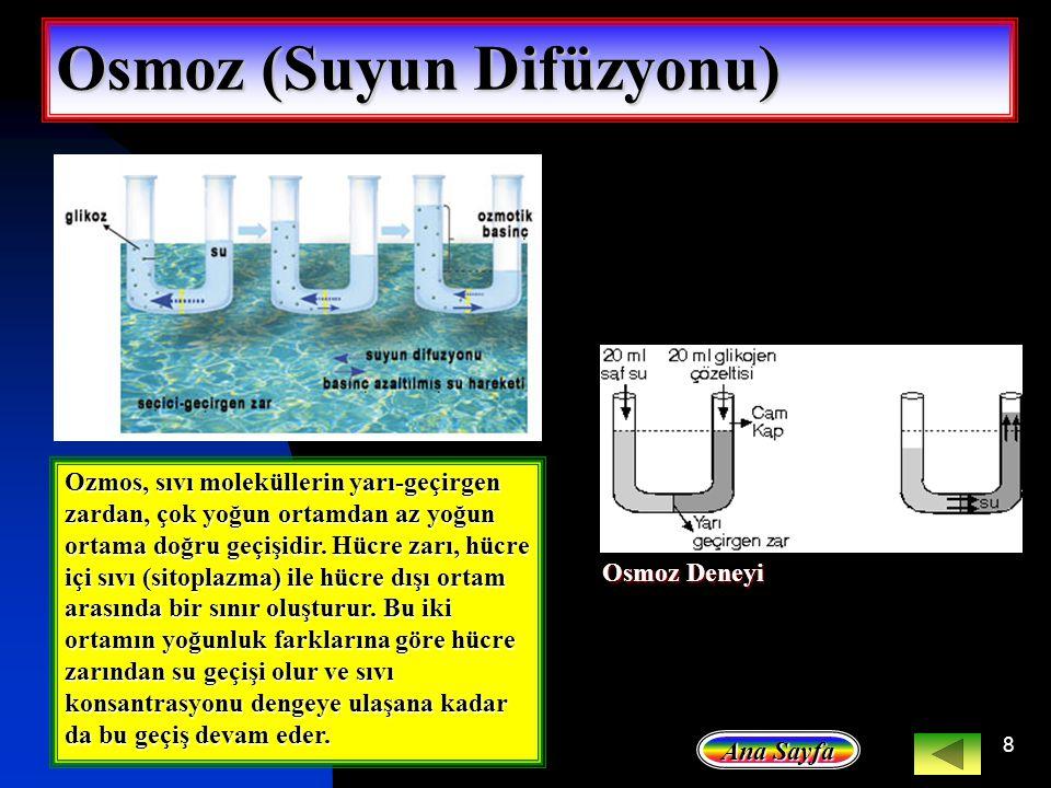 Osmoz (Suyun Difüzyonu)