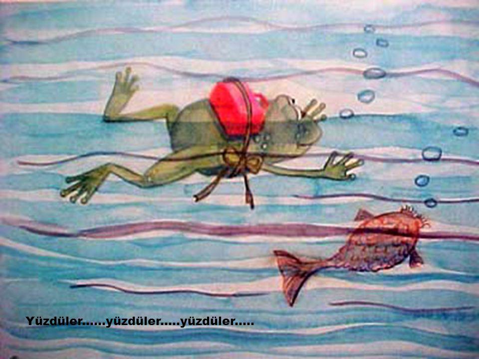 Yüzdüler......yüzdüler.....yüzdüler.....