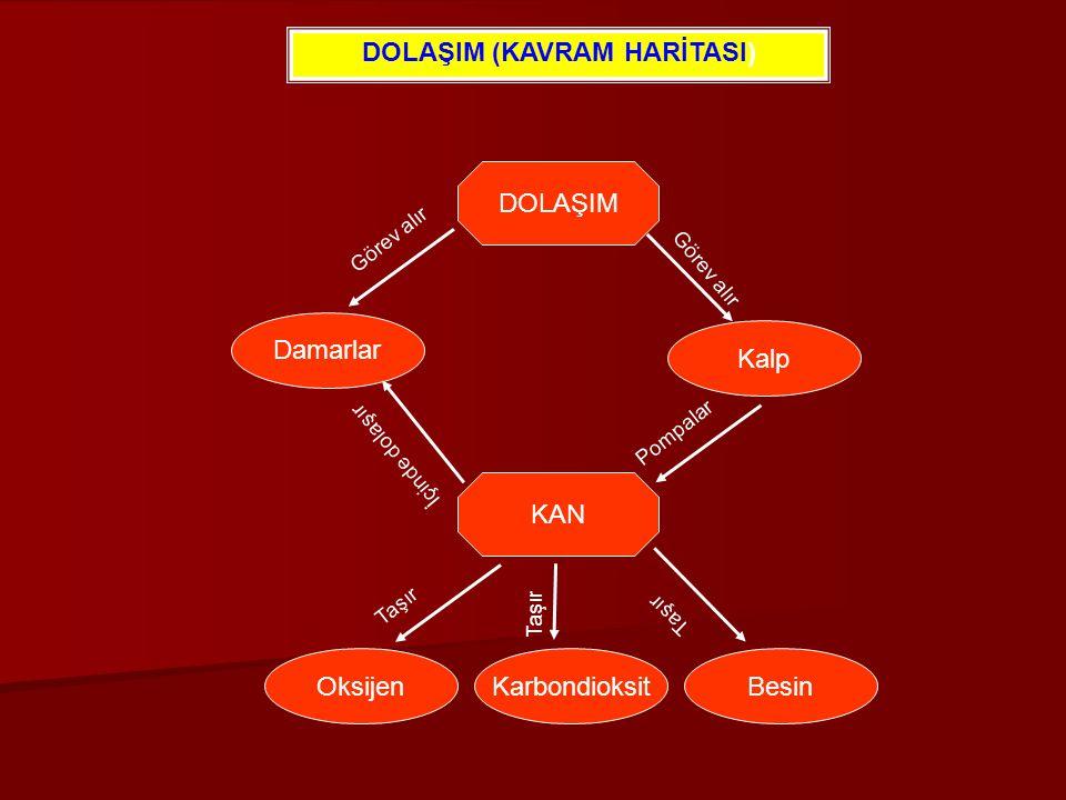DOLAŞIM (KAVRAM HARİTASI)
