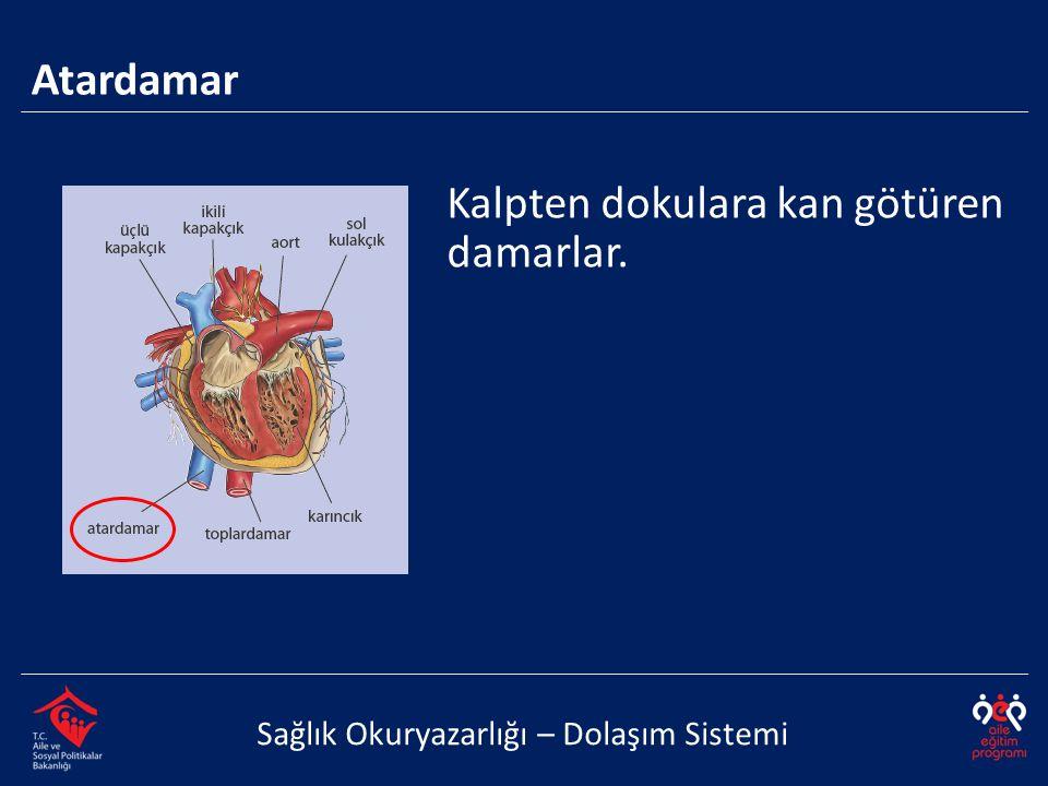 Kalpten dokulara kan götüren damarlar.