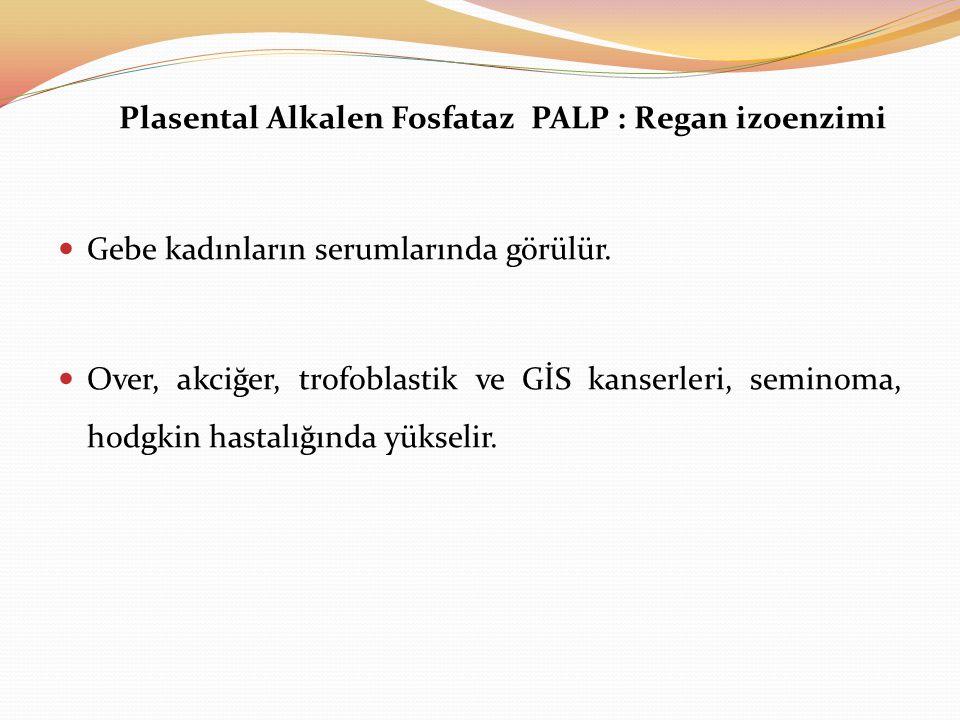 Plasental Alkalen Fosfataz PALP : Regan izoenzimi