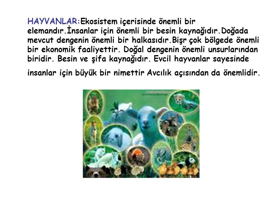 HAYVANLAR:Ekosistem içerisinde önemli bir elemandır