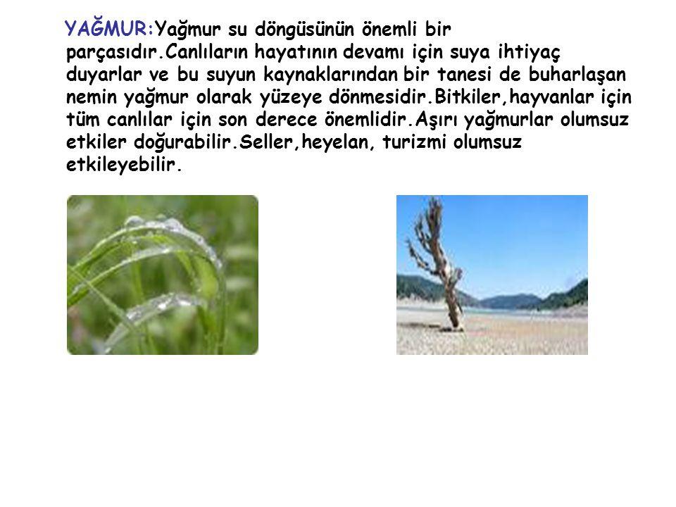 YAĞMUR:Yağmur su döngüsünün önemli bir parçasıdır