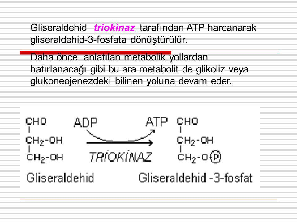 Gliseraldehid triokinaz tarafından ATP harcanarak gliseraldehid-3-fosfata dönüştürülür.