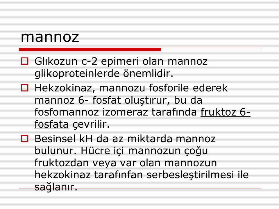 mannoz Glıkozun c-2 epimeri olan mannoz glikoproteinlerde önemlidir.
