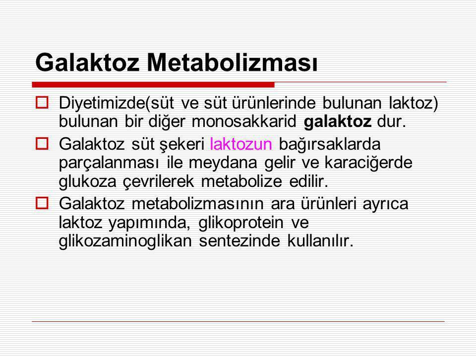 Galaktoz Metabolizması