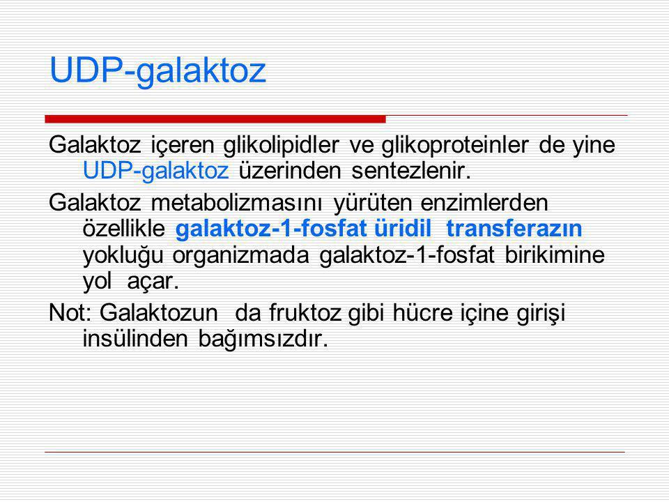 UDP-galaktoz Galaktoz içeren glikolipidler ve glikoproteinler de yine UDP-galaktoz üzerinden sentezlenir.