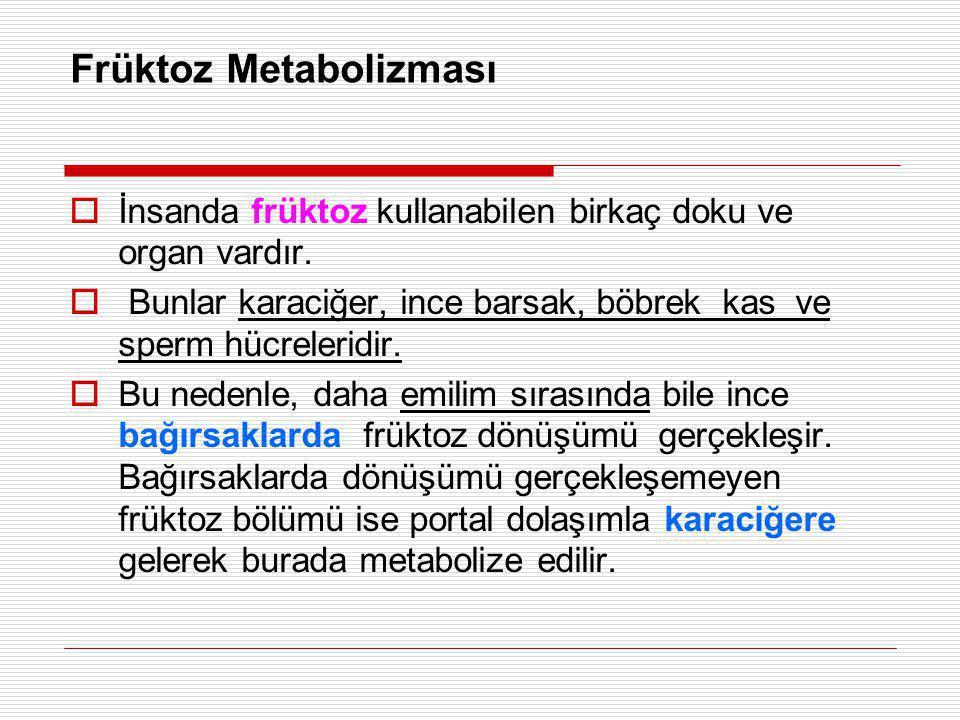 Früktoz Metabolizması