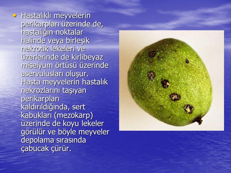 Hastalıklı meyvelerin perikarpları üzerinde de, hastalığın noktalar halinde veya birleşik nekrotik lekeleri ve üzerlerinde de kirlibeyaz miselyum örtüsü üzerinde aservulusları oluşur.