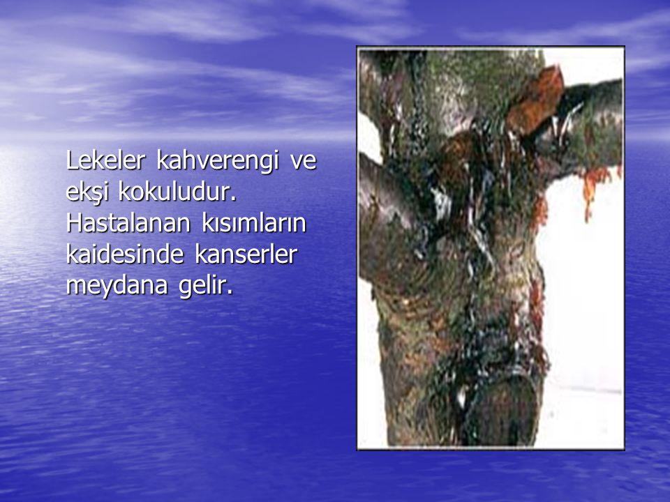 Lekeler kahverengi ve ekşi kokuludur