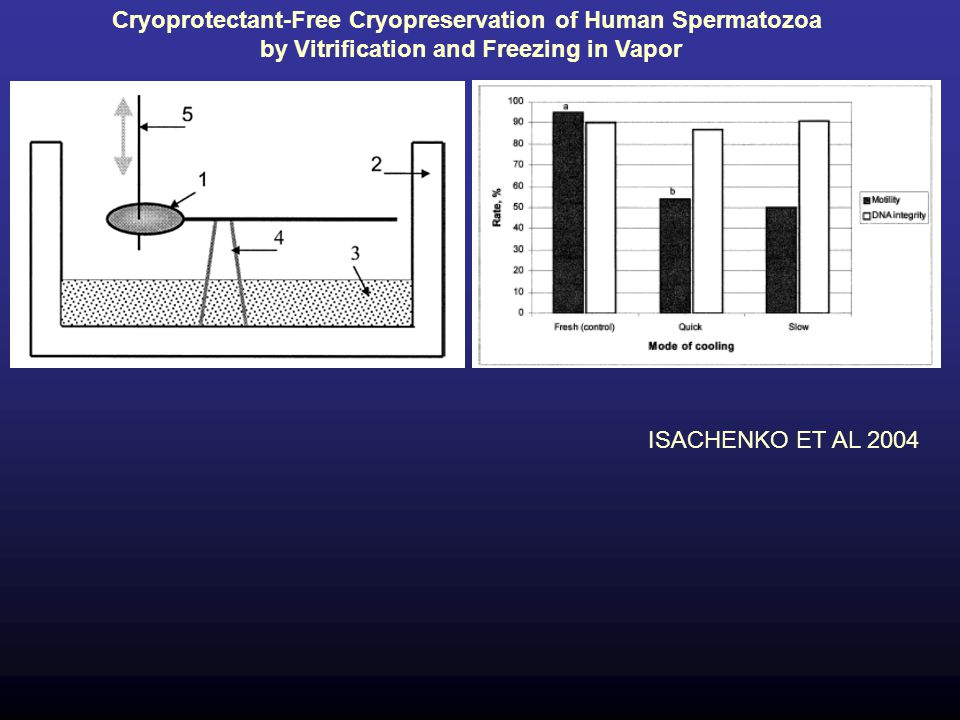 Cryoprotectant-Free Cryopreservation of Human Spermatozoa