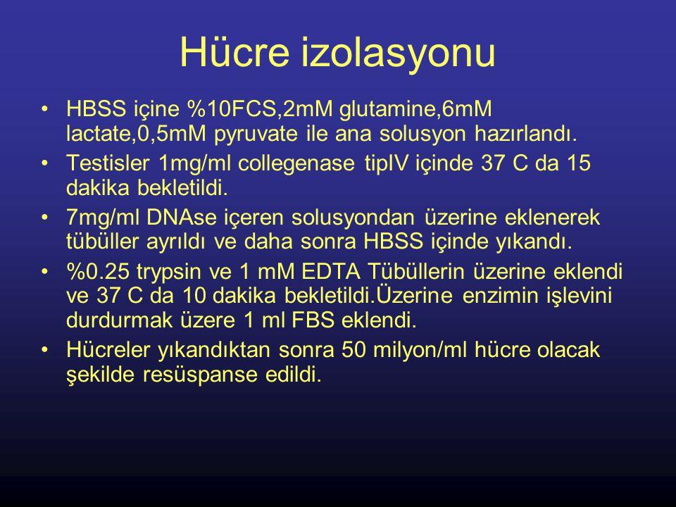 Hücre izolasyonu HBSS içine %10FCS,2mM glutamine,6mM lactate,0,5mM pyruvate ile ana solusyon hazırlandı.